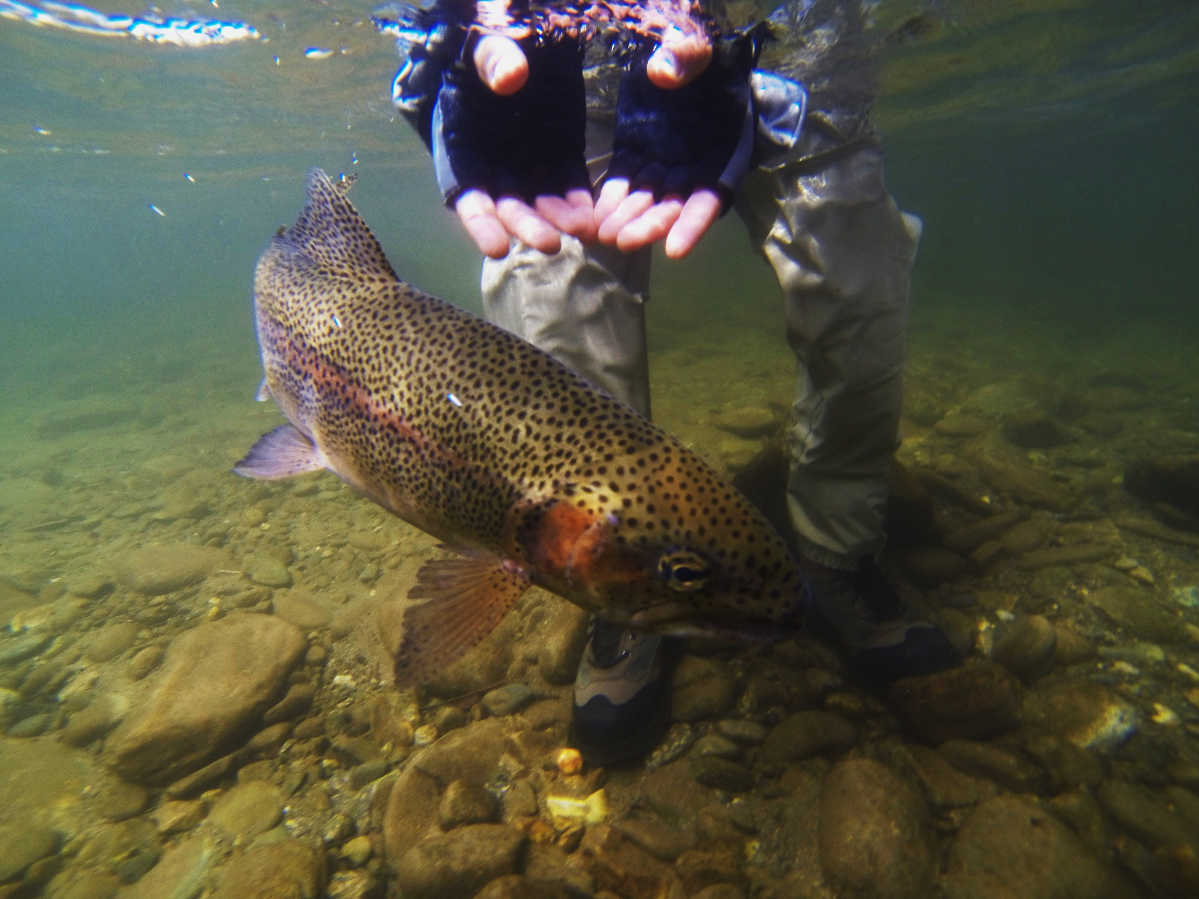 Fly fishing guides for western north carolina hookers for Fishing in nc