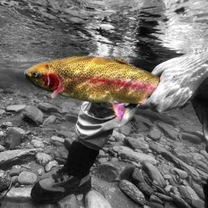 Fly Fishing Raven's Fork