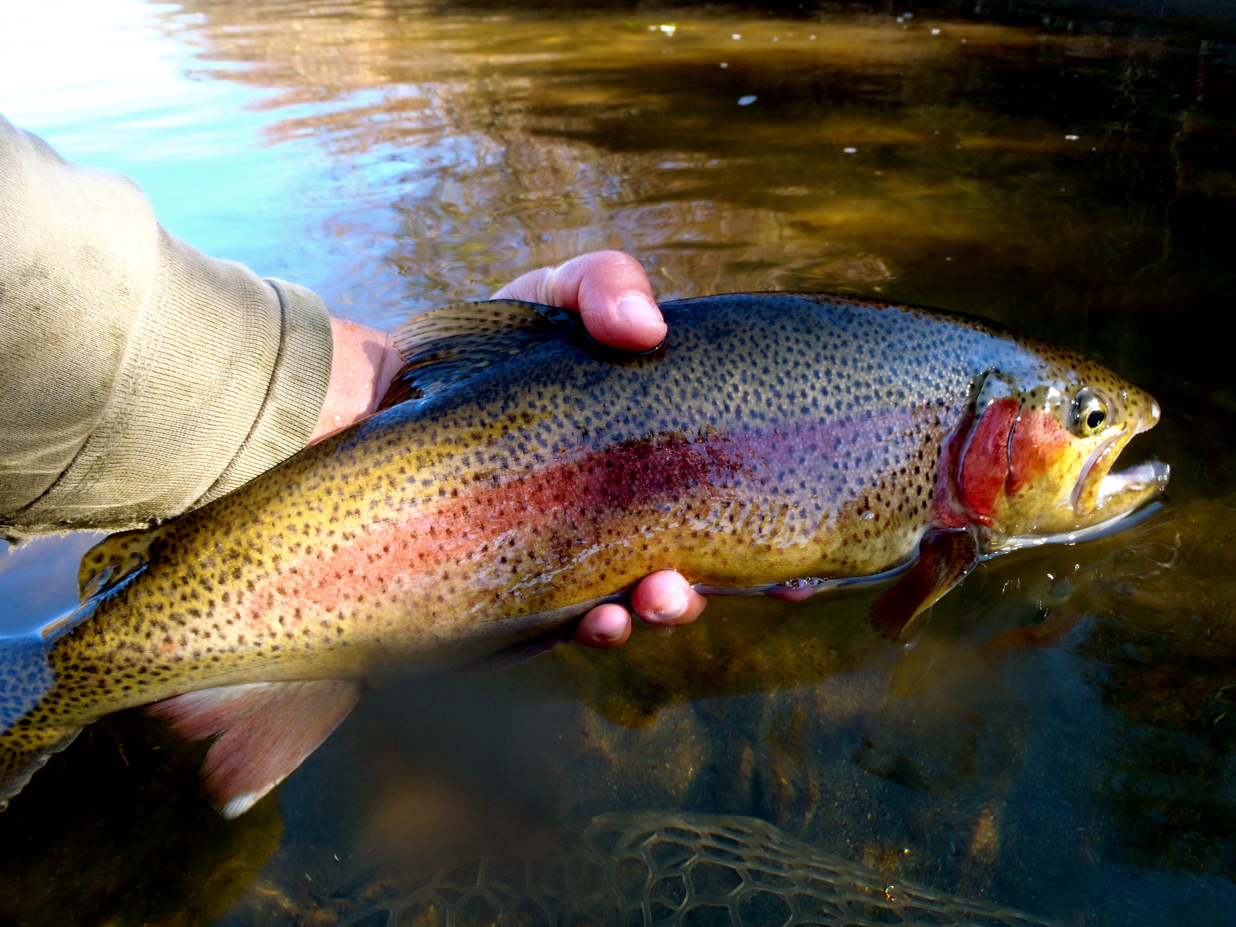 Fly fish the western north carolina fly fishing trail for Best fishing in nc