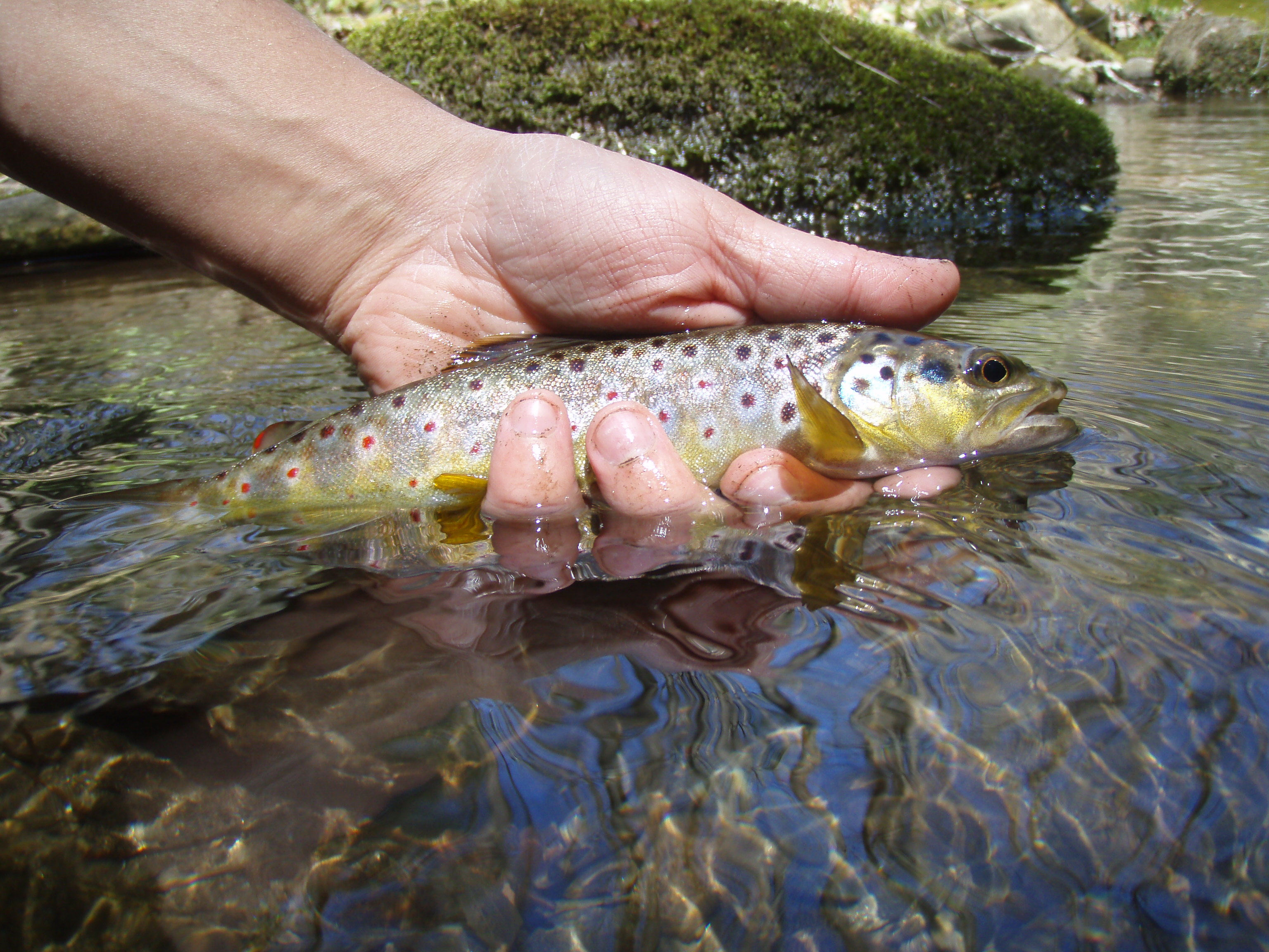 Gallery 2 hookers fly shop and guide service your for Fly fishing smoky mountains