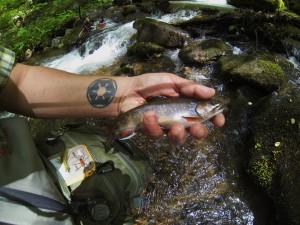 Catching wild Brookies