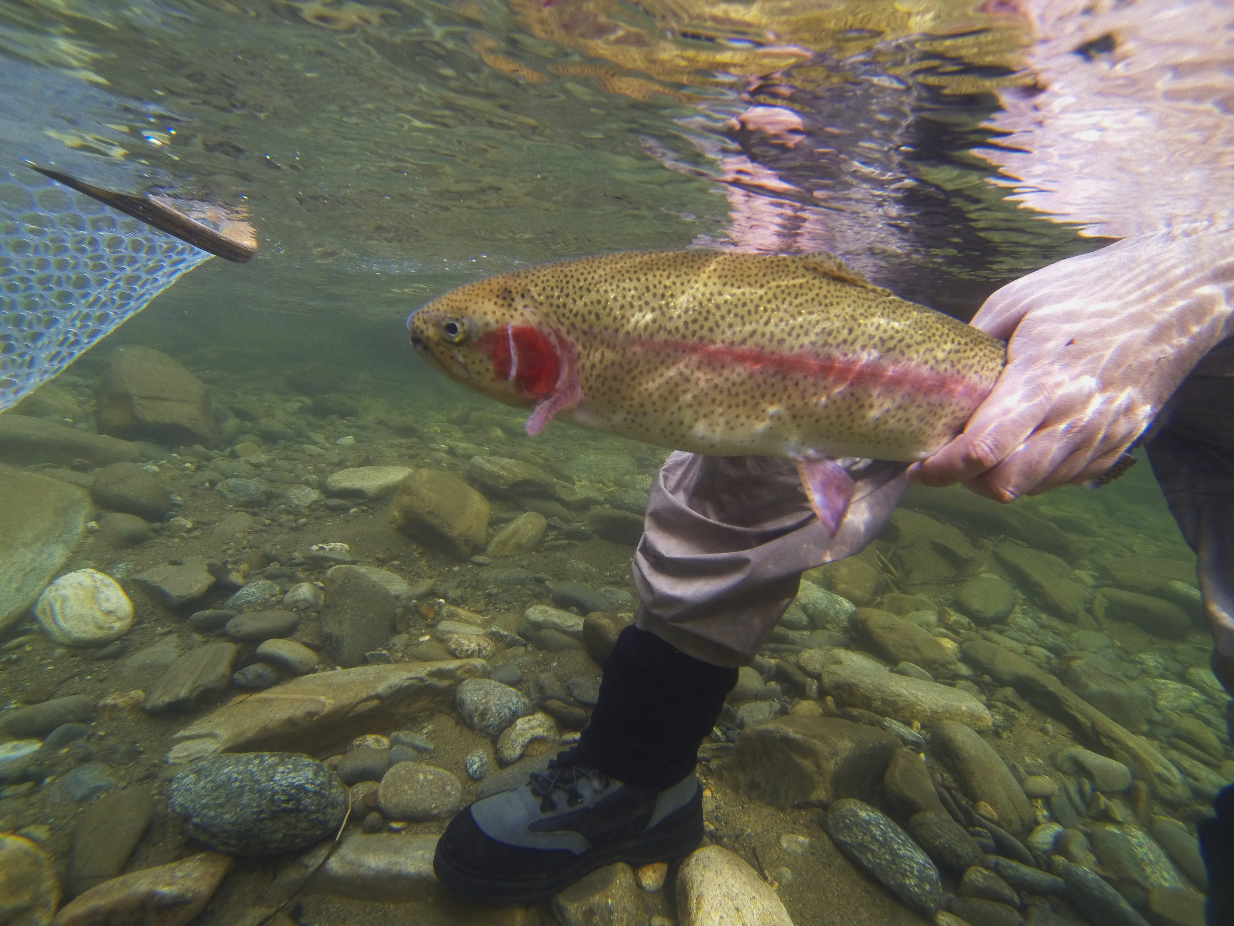 Trout fishing in cherokee nc hookers fly shop and guide for Cherokee trout fishing