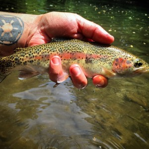 Fly Fishing Hazel Creek