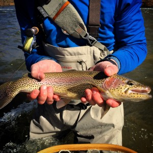 Tuckasegee Fishing Report