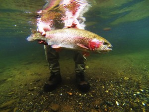 Guided Fly Fishing in Cherokee NC