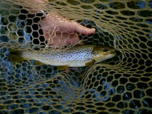 Nantahala Fly Fishing