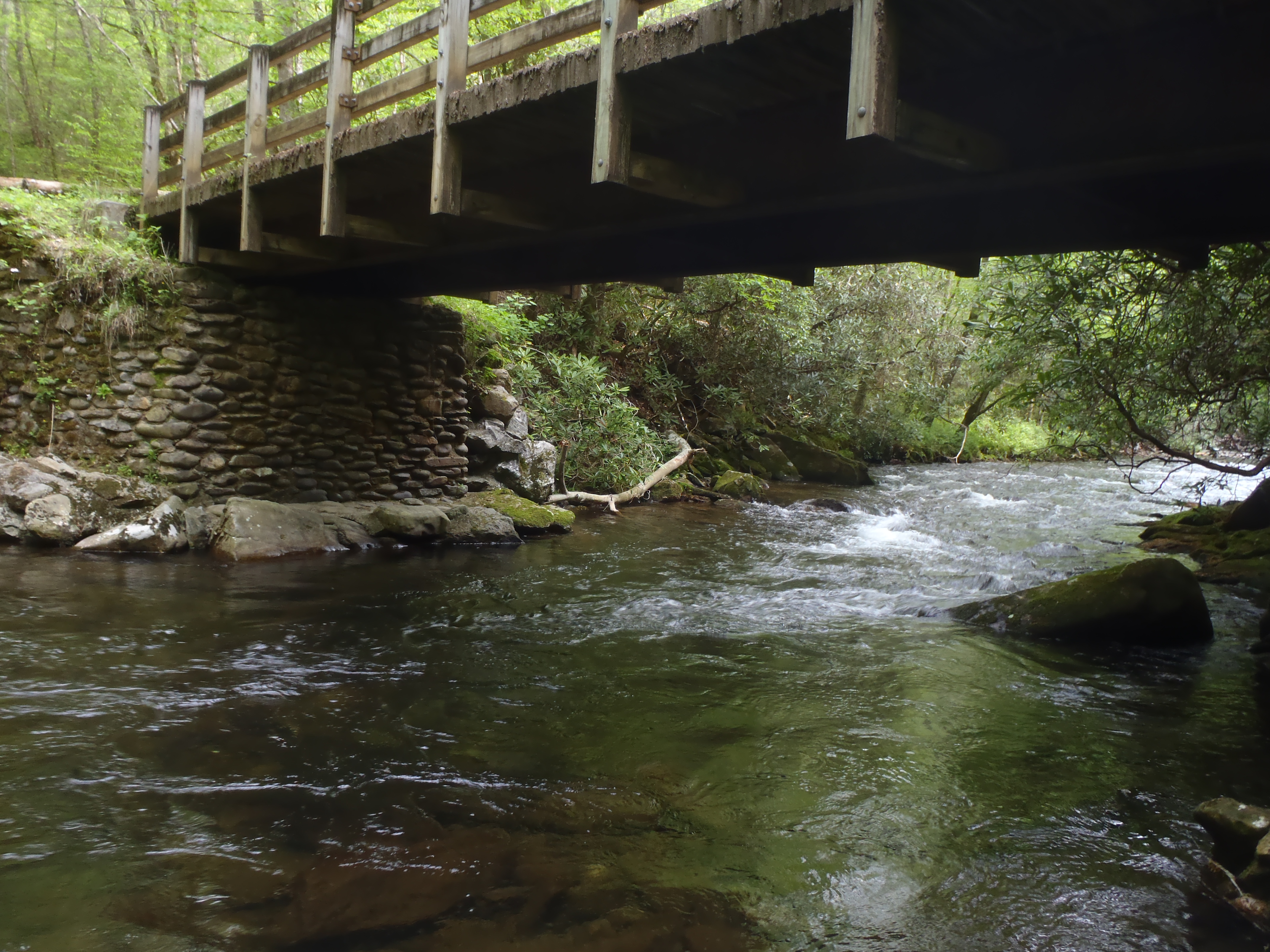 Guided fly fishing trips in the great smoky mountains for Fly fishing trips