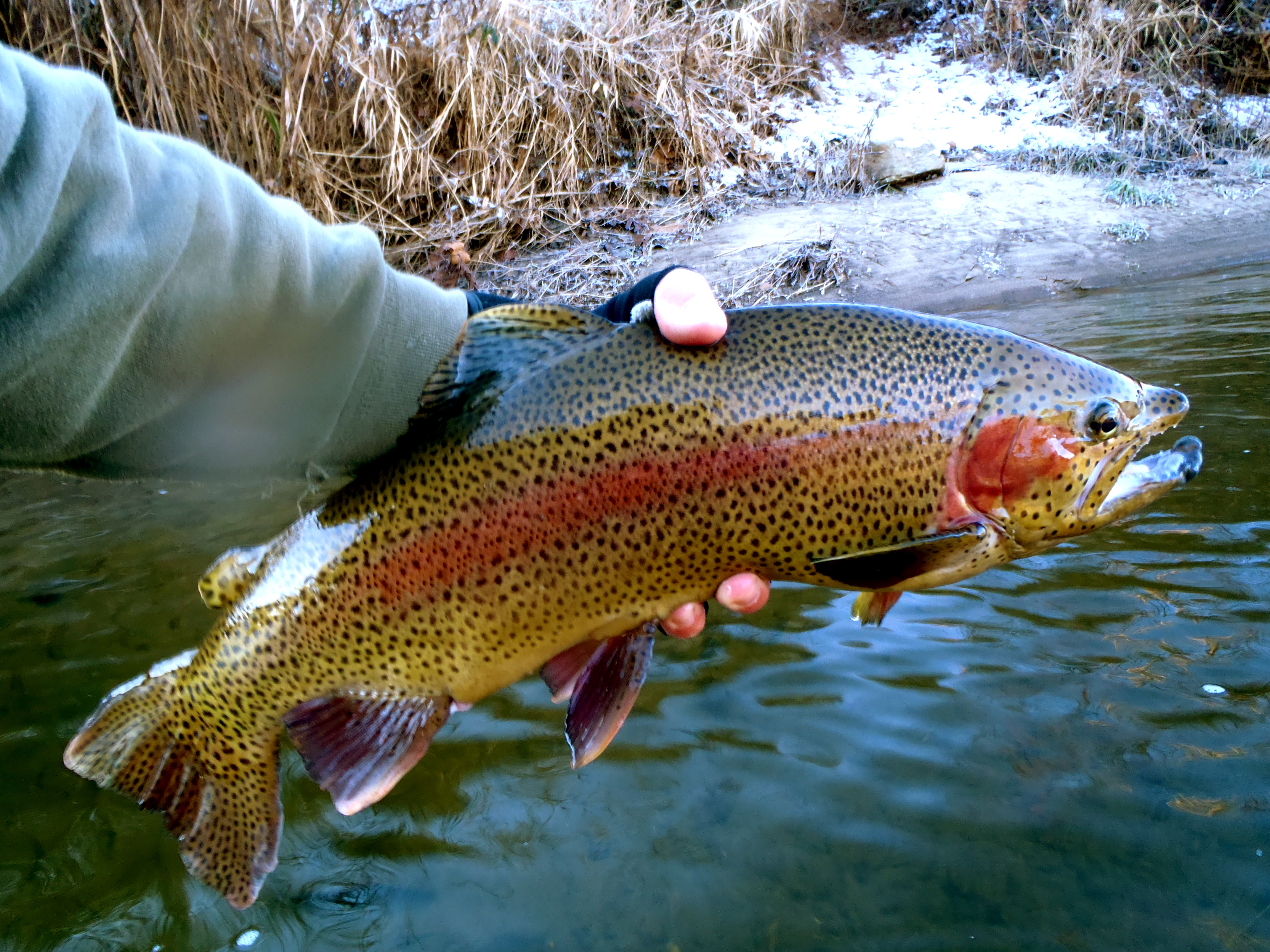 Cherokee fly shop hookers fly shop and guide service for Cherokee trout fishing