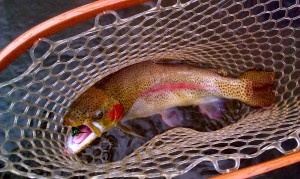 Big Tuckasegee Rainbow Feb. 2012
