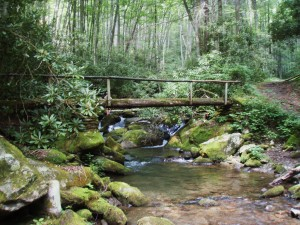 Guided fly fishing trips in the great smoky mountains national park