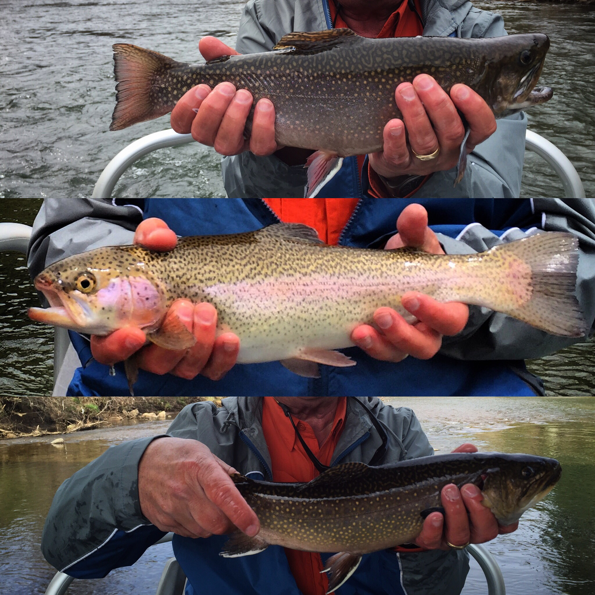 Fly fishing trips on the tuckasegee river hookers fly for Fly fishing trips